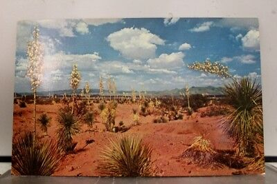 New Mexico NM Desert Yucca State Flower Postcard Old Vintage Card View Standard