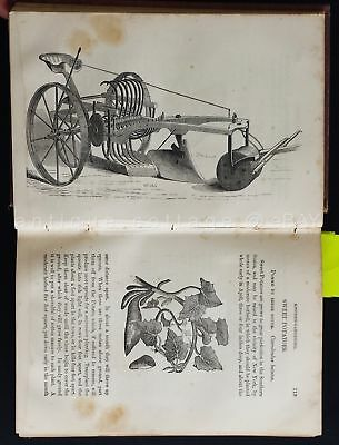 1867 antique GARDEN gardening PLANS GRAPE VINE TOOLS FRUIT FLOWERS VEGETABLE