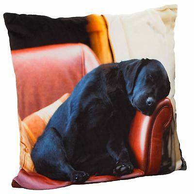 Country Matters Soft Touch Laser Printed Cushion 45cm - Sleeping Lab