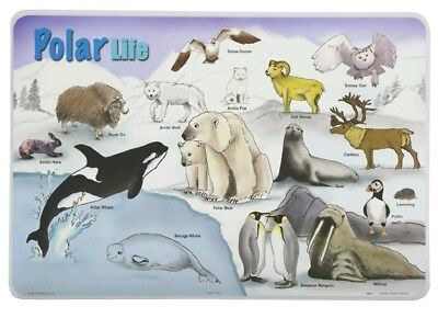 Painless Learning Placemats - Polar Life Placemat - Set of 4 New