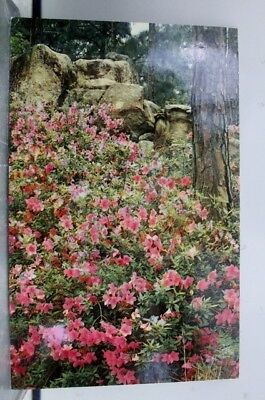 Louisiana LA Many Hodges Gardens Postcard Old Vintage Card View Standard Post PC