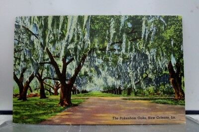 Louisiana LA Pakenham Oaks New Orleans Postcard Old Vintage Card View Standard