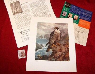 PEREGRINE FALCON PRINT by artist HARRY C. ADAMSON. MINT, WITH STAMP IN FOLIO. VF