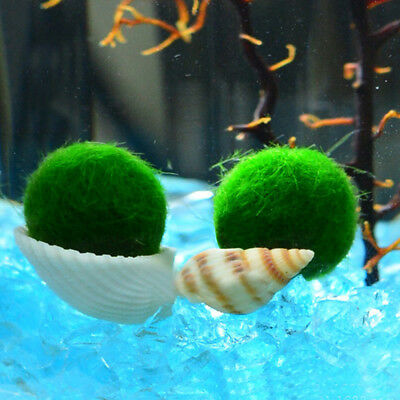 1PC Giant Marimo Moss Ball Cladophora Live Aquarium Plant Fish Aquarium Decor