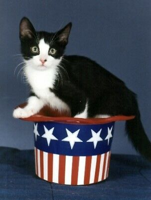 Pet Notecards:Cat Kitten Black Patriotic