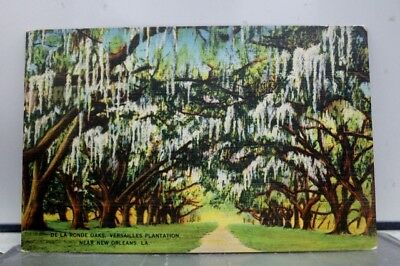 Louisiana LA New Orleans Versailles Plantation De La Ronde Oaks Postcard Old PC