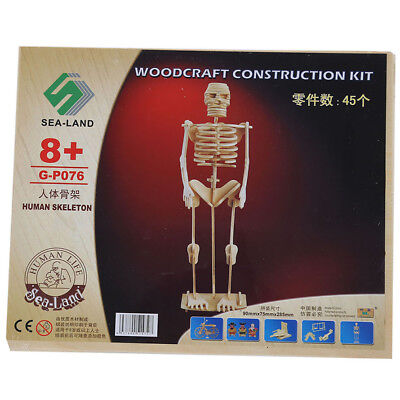 Human Skeleton Model Learning Kit Science Educational Tool Anatomy Kids Toy Z