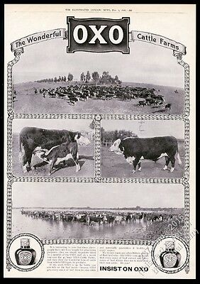 1910 cow bull cattle herd 4 photo OXO beef food BIG UK vintage print ad