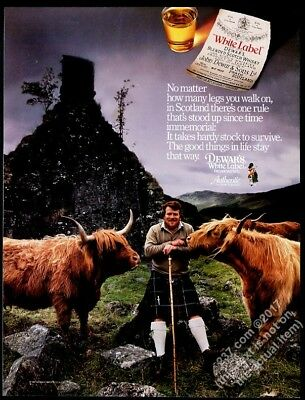 1988 highland cattle bull photo Dewar's Scotch Whisky vintage print ad