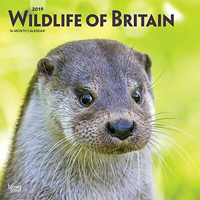 Wildlife of Britain Calendar 2019 Square Wall Size 30x30cms RSPCA