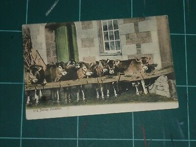 Jersey, Featuring Jersey Cows 1905 Posted Postcard