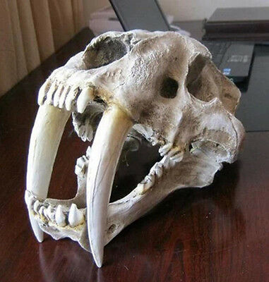 Saber-toothed Tiger Skull Paleontology Model Smilodon Home Statue Collectible