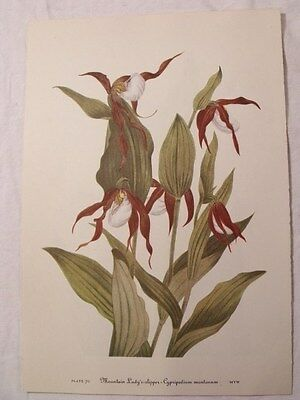 Set of 12 Vintage MARY WALCOTT Botanical Wildflower Art Prints SPRING FLOWERS