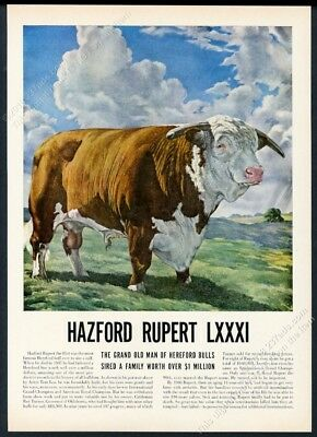 1949 Champion Hereford bull Hazford Rupert illustrated vintage print article
