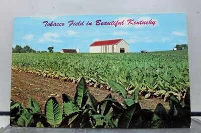 Kentucky KY Tobacco Field Postcard Old Vintage Card View Standard Souvenir Post