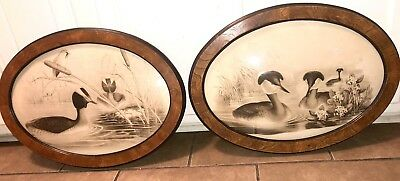Set of 2 Vintage Oval Framed Sepia Duck Prints~Convex Bubble Glass~Gorgeous!