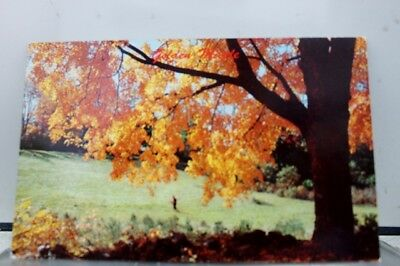 Scenic Hunter Autumn Fall Field Postcard Old Vintage Card View Standard Souvenir