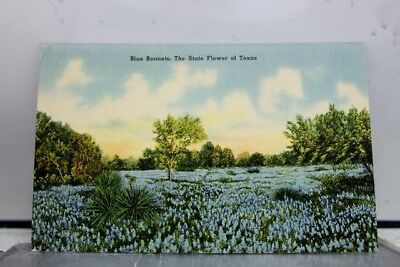 Texas TX State Flower Blue Bonnets Postcard Old Vintage Card View Standard Post