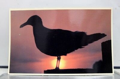 Scenic Sea Gull New England Postcard Old Vintage Card View Standard Souvenir PC