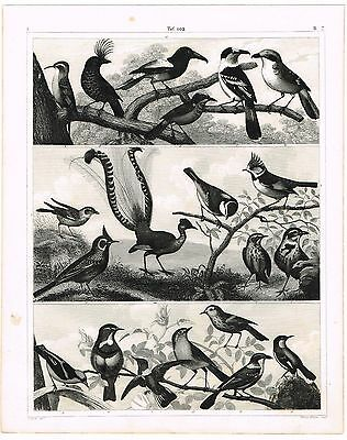 Original Antique Print Vintage 1851 Engraving Nature Birds Lark Robin Skylark