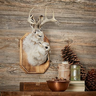 Buck & Doe Jackalope Head Wall Wood Plaque Mount Real Antlers Taxidermy Décor