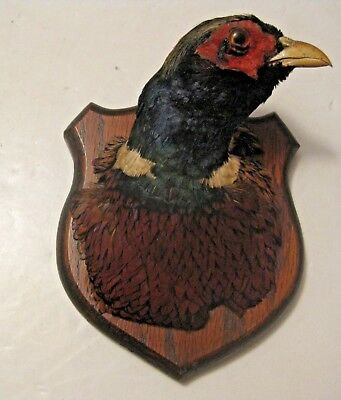 Own The World's Ugliest Taxidermy Pheasant Mount ~ A Chance Of A Lifetime !