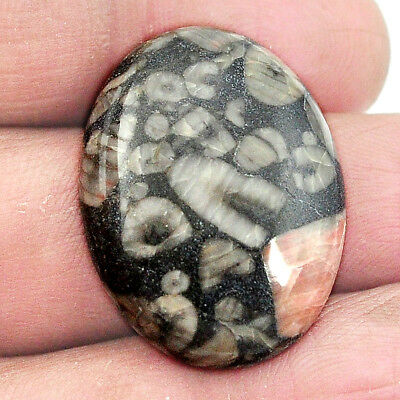Natural 26.95cts crinoid fossil black cabochon 27x20mm oval loose gemstone s2966