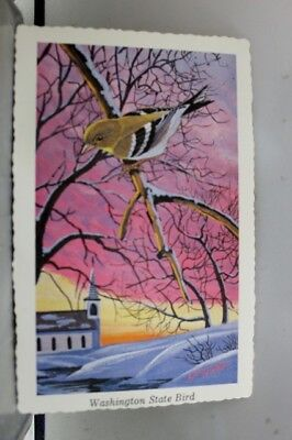 Washington WA State Bird Willow Goldfinch Postcard Old Vintage Card View Post PC