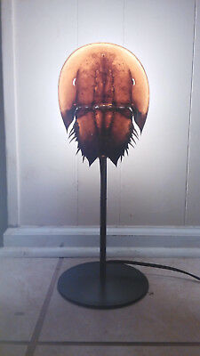 "One of a Kind - Large Horseshoe Crab Shell Molt Lamp Hand Made 17"", Seashells"