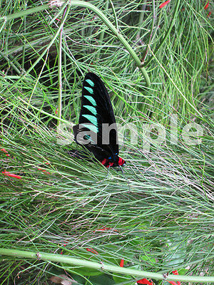 1 Red Green Black Butterfly Digital Photo Dollar Image Picture - Design Project
