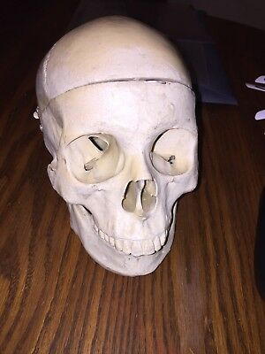 Vintage Medical Skull Cranial Cavity Opens For Inspection Hinged Mandible Teeth!