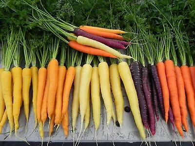 300Pcs Rainbow Carrot Seeds Organic 6 Colors viable Vegetables High Germination