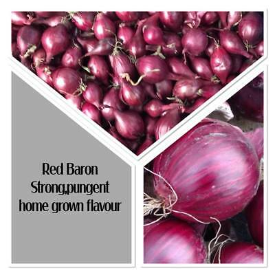 50 RED BARON ** ONION SETS ** Planting/Homegrown/Vegetable/Handpicked