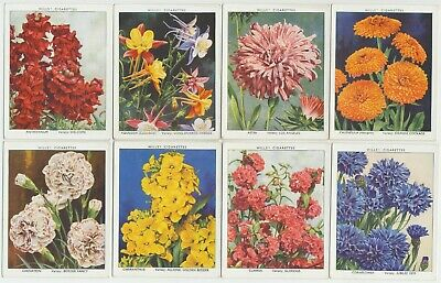 WILLS UK- 1938 : Garden Flowers-New Varieties 1st Cmpl Set (40) Large Cig. Cards