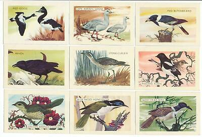 SHELL (Aust.) 1961 : AUSTRALIAN BIRDS Complete Set (60) Trade Cards