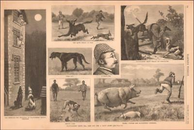 CITY MAN to the COUNTY to HUNT has many TROUBLES antique engraving original 1882
