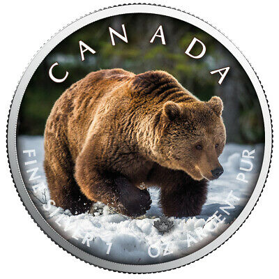 Maple  Leaf Grizzly Farbe On the Trails of Wildlife 3te Ausgabe 1 oz 999 Silber