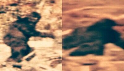 mountain monsters bigfoot of ashe county aims erupts
