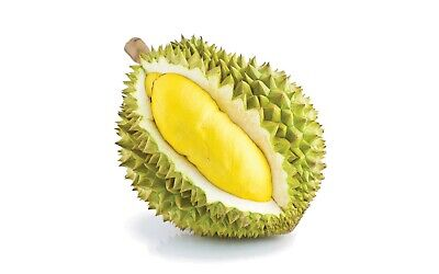 5PCS DURIAN FRUIT Tree Seeds Delicious Tropical King Of Fruit Bonsai Giant  Plant