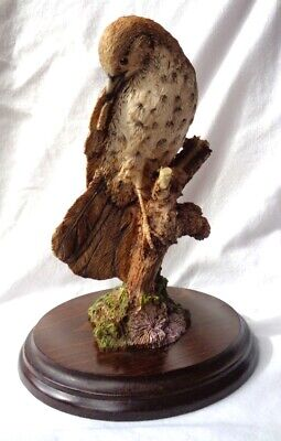 COUNTRY ARTISTS. very, very rare early mounted figure of a THRUSH. c.1978. !!!!!