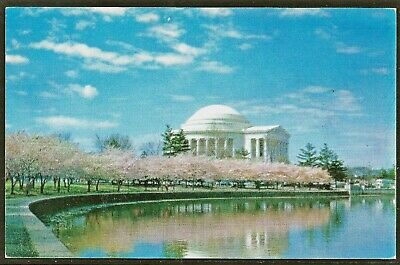JEFFERSON MEMORIAL Cherry Trees In Bloom 1950's Postcard by Prince Lithograph