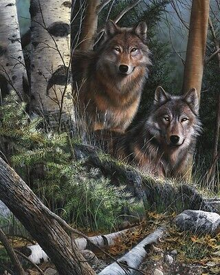 WOLF ART PRINT - Watchful Eyes by Kevin Daniel Wildlife Wolves Poster 29.5x37