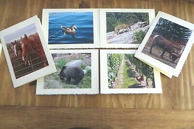 6 Animal Wildlife Photo Greeting Cards Blank Cards  Great Gift