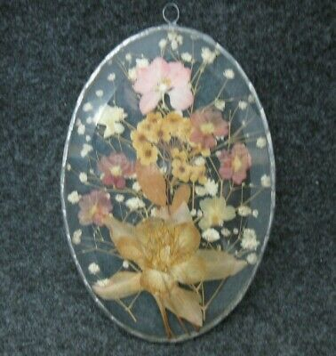Vintage Dried Flowers Under Glass Oval Wall Hanging Plaque Beautiful!