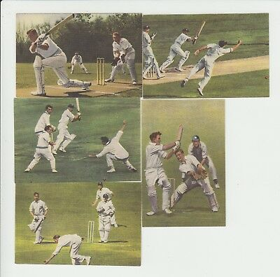 Cricket : 1950s Dutch sports card sub set of 5 cards