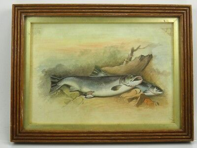 Late 19th century sporting fish watercolour painting salmon on the bank
