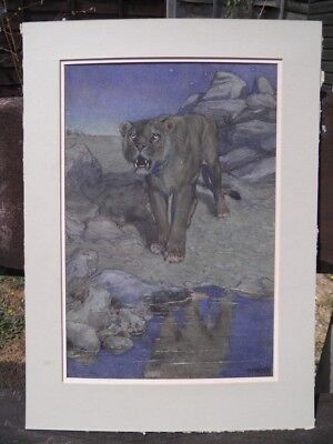 Early 20th century Art Deco watercolour painting portrait lion by a river signed