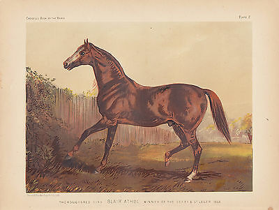 Horse Steeplechasing Equestrian Thoroughbred Vintage Poster Repro FREE SHIP