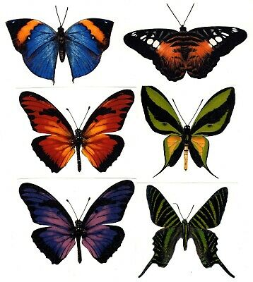 Butterfly Vibrant Butterflies 6 pcs Select-A-Size Waterslide Ceramic Decals Bx