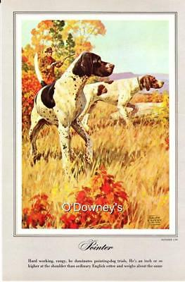 Vintage color prints (4) Sporting Dogs Ralph Cosby Smith Pointer Retrievers 1961